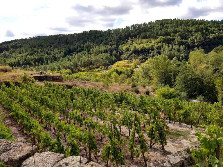 Domaine viticole Salel et Renaud